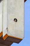 nid de faucon sur une grue
