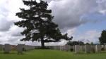 [REPORTAGE VIDEO] Les coolies, une communauté oubliée de la Grande Guerre