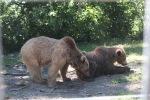 La nouvelle vie des oursons Masha et Grisha